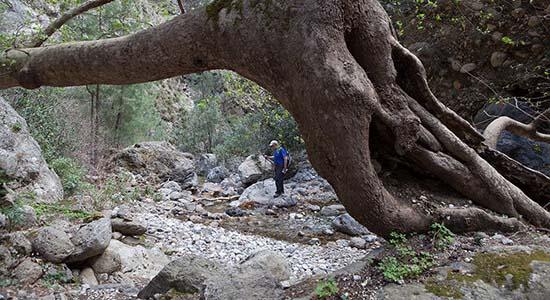 Taxi Sougia Agia Irini Gorge